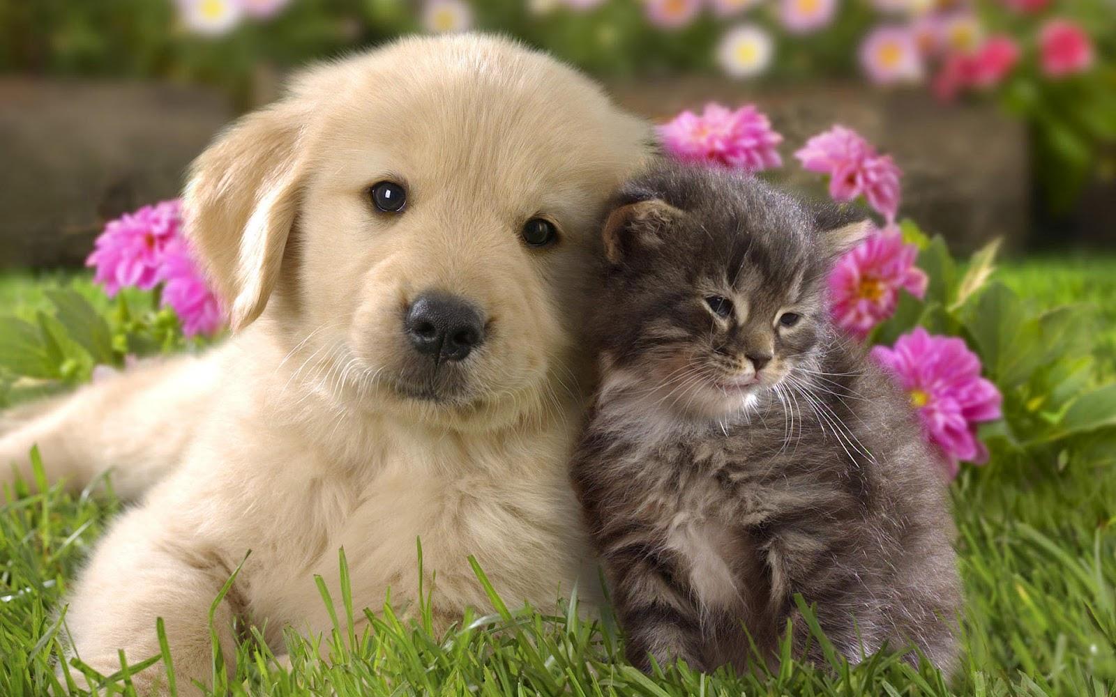Vilket husdjur passar dig?